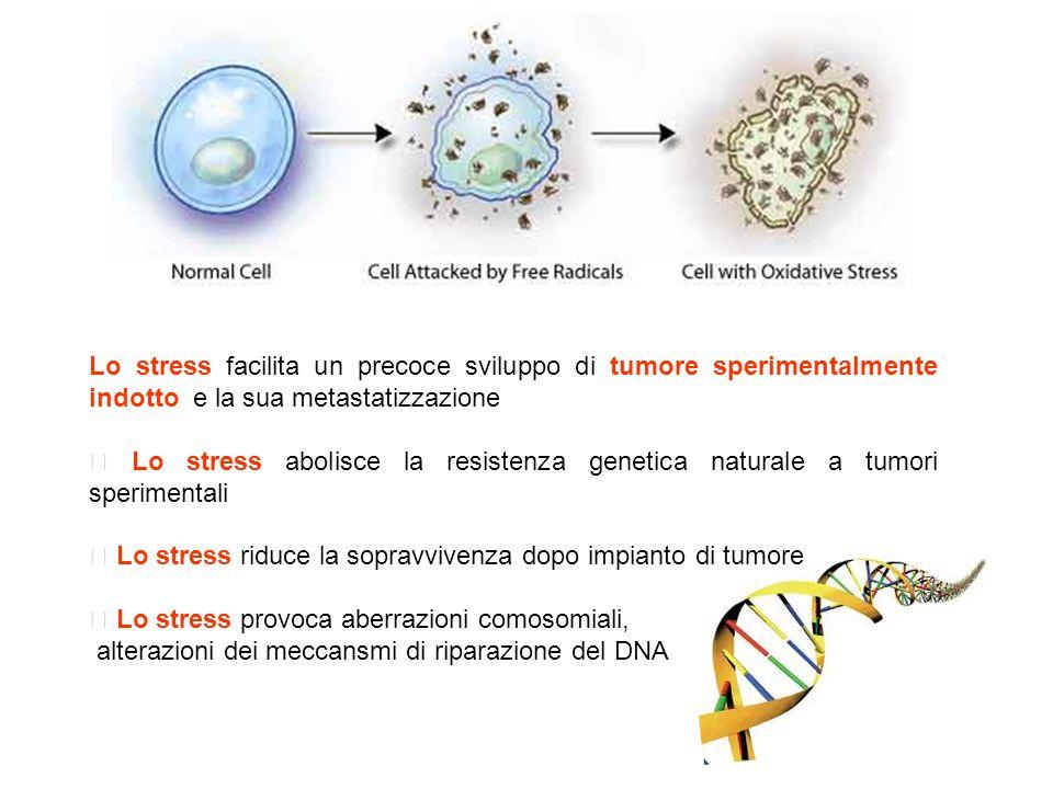 Lo stress facilita un precoce sviluppo di tumore sperimentalmente indotto e la sua metastatizzazione
