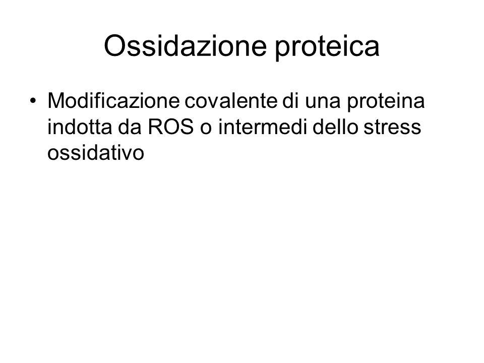 Ossidazione proteica Modificazione covalente di una proteina indotta da ROS o intermedi dello stress ossidativo.