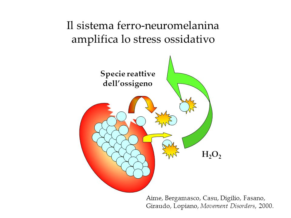 Il sistema ferro-neuromelanina amplifica lo stress ossidativo