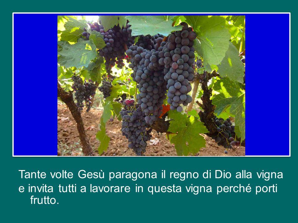 Tante volte Gesù paragona il regno di Dio alla vigna e invita tutti a lavorare in questa vigna perché porti frutto.