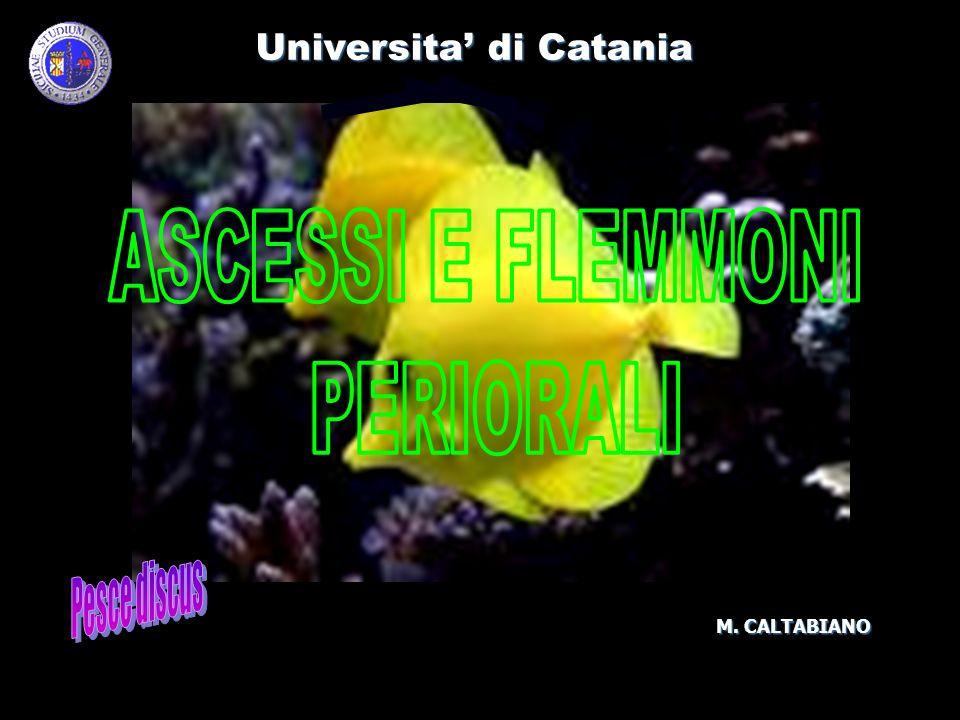 ASCESSI E FLEMMONI PERIORALI Pesce discus Universita' di Catania
