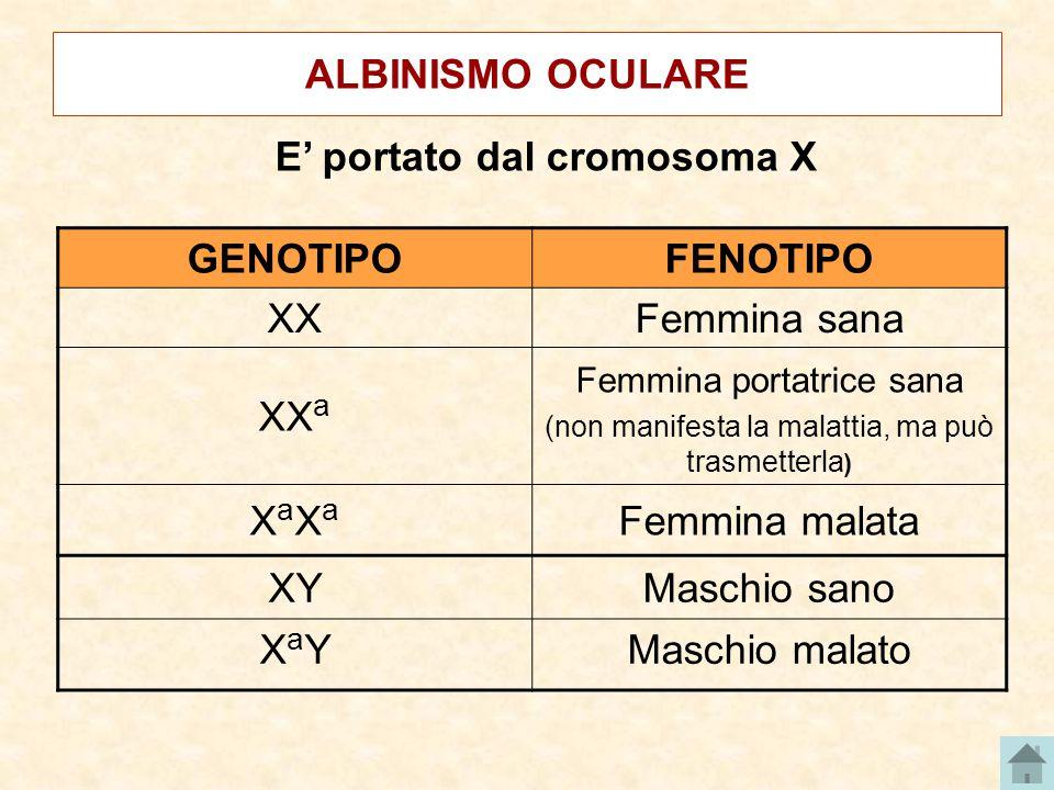 E' portato dal cromosoma X