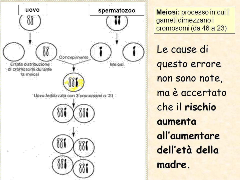 uovo spermatozoo. Meiosi: processo in cui i gameti dimezzano i cromosomi (da 46 a 23)