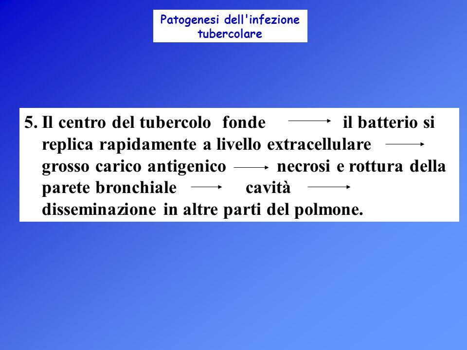 Patogenesi dell infezione tubercolare