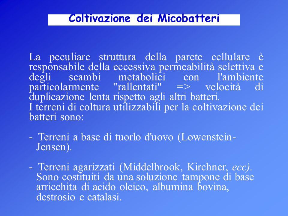 Coltivazione dei Micobatteri