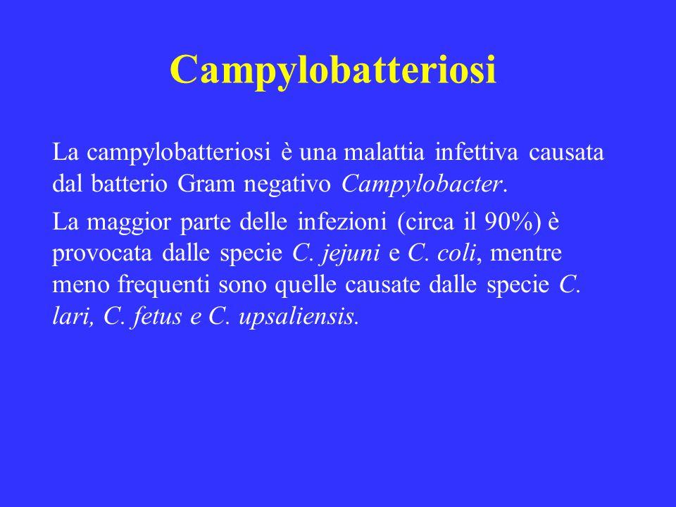 Campylobatteriosi La campylobatteriosi è una malattia infettiva causata dal batterio Gram negativo Campylobacter.