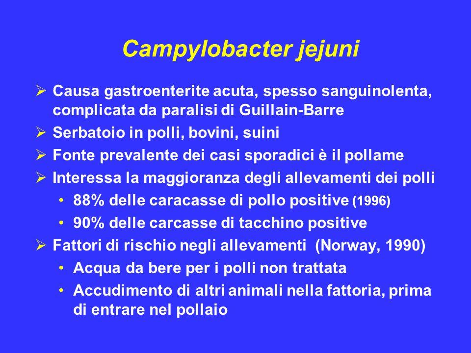 Campylobacter jejuni Causa gastroenterite acuta, spesso sanguinolenta, complicata da paralisi di Guillain-Barre.