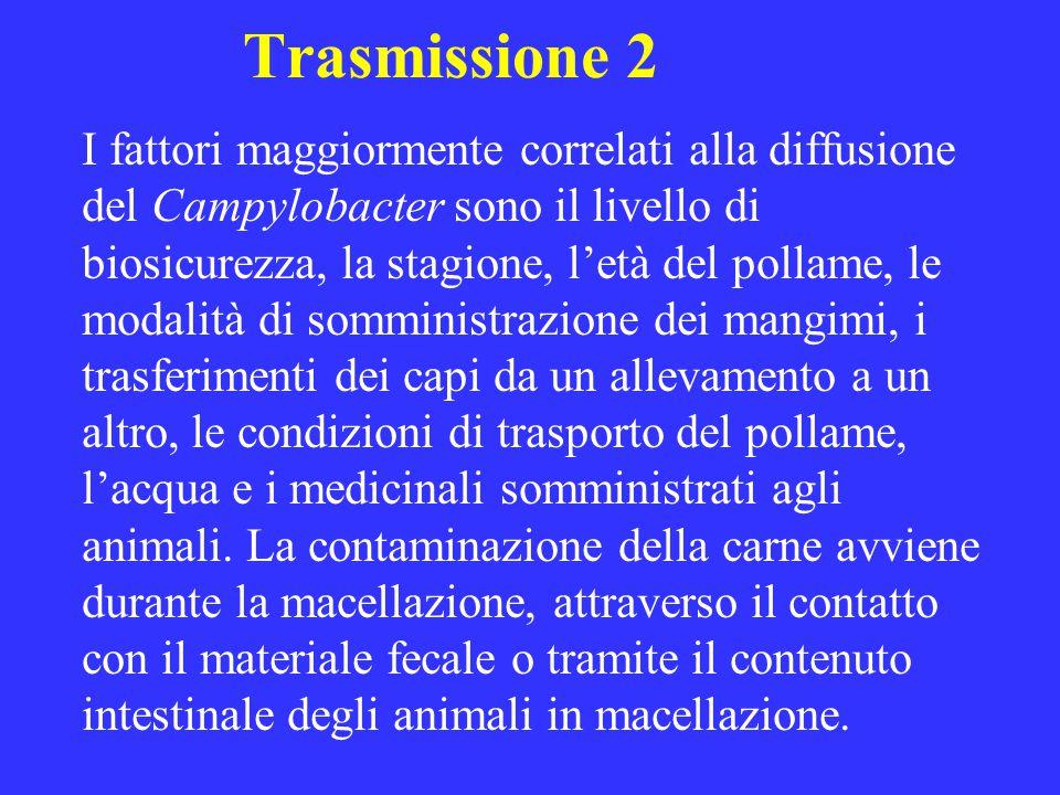 Trasmissione 2