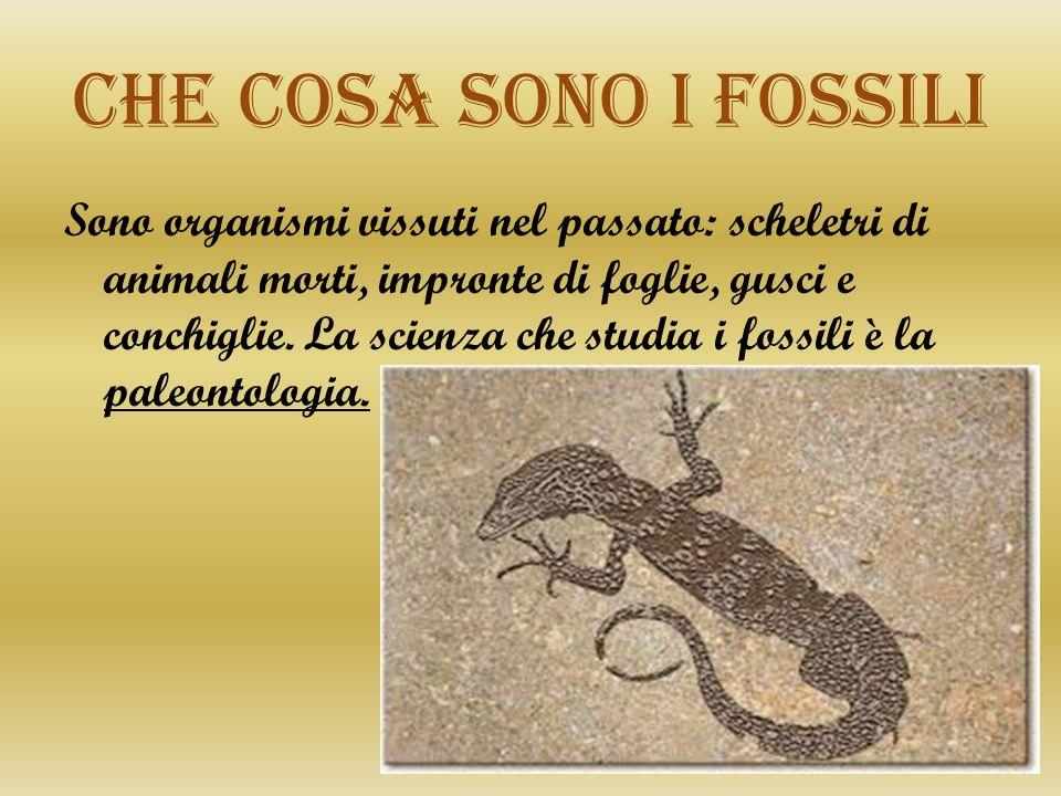 Che cosa sono i fossili