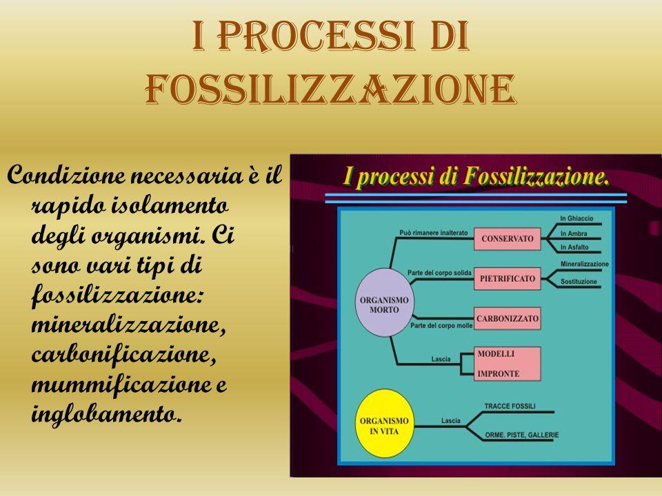 I processi di fossilizzazione
