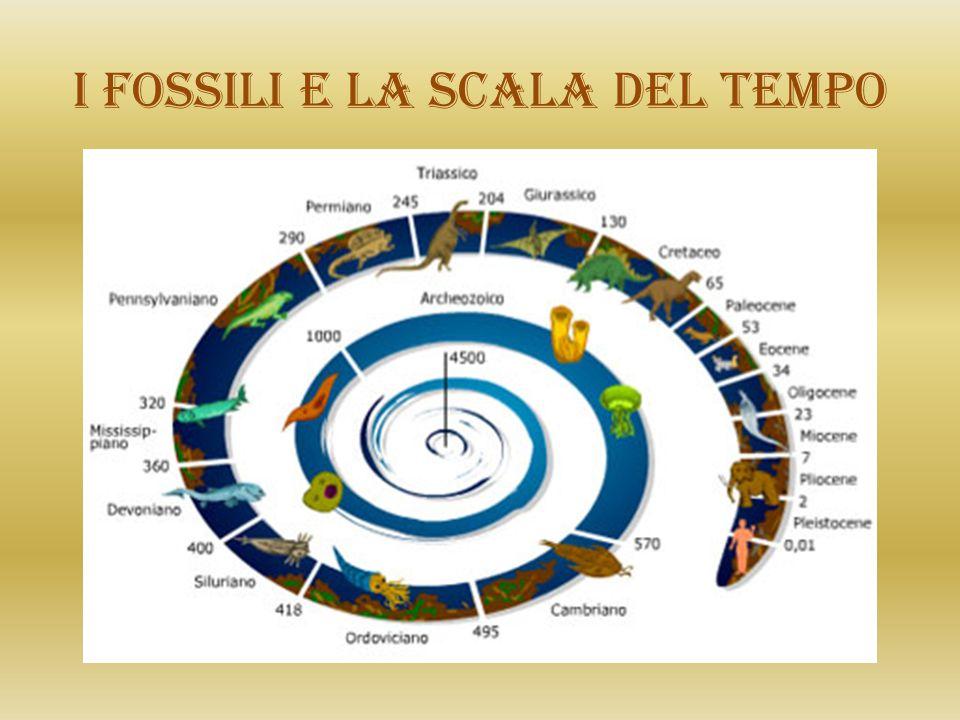I fossili e la scala del tempo