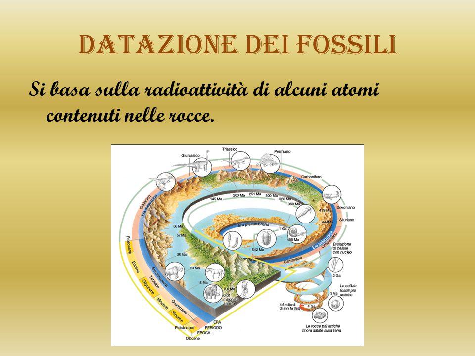 Datazione dei fossili Si basa sulla radioattività di alcuni atomi contenuti nelle rocce.
