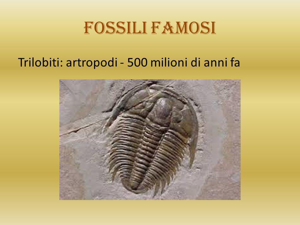 Fossili famosi Trilobiti: artropodi - 500 milioni di anni fa