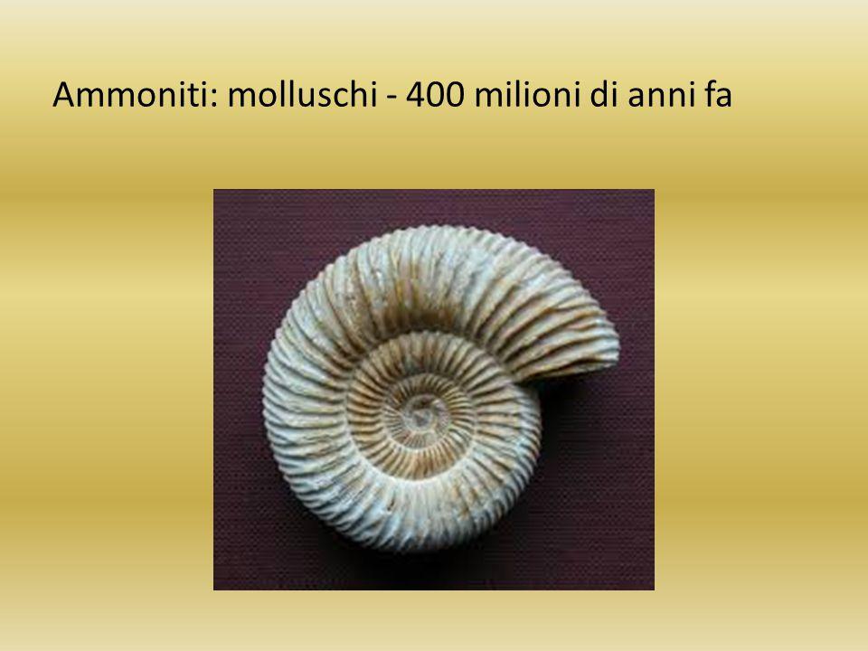 Ammoniti: molluschi - 400 milioni di anni fa