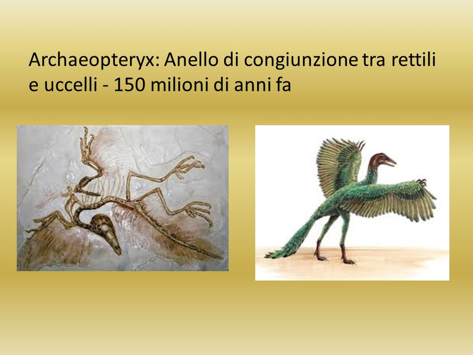 Archaeopteryx: Anello di congiunzione tra rettili e uccelli - 150 milioni di anni fa