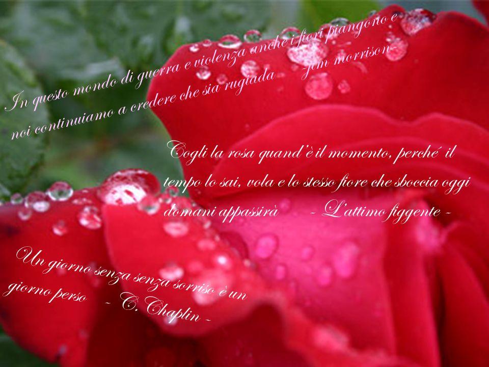 In questo mondo di guerra e violenza anche i fiori piangono e noi continuiamo a credere che sia rugiada -jim morrison-