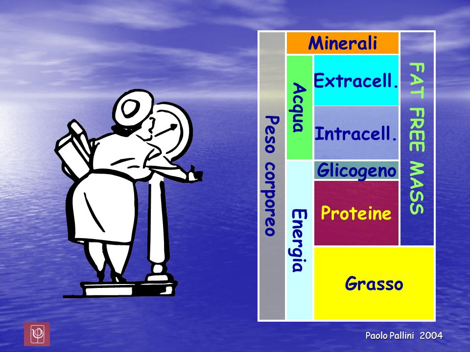 Peso corporeo Minerali FAT FREE MASS Acqua Extracell. Intracell. Energia Glicogeno Proteine Grasso