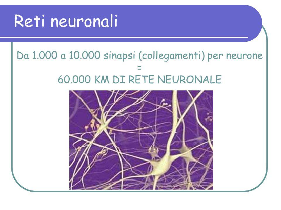 Da 1.000 a 10.000 sinapsi (collegamenti) per neurone =