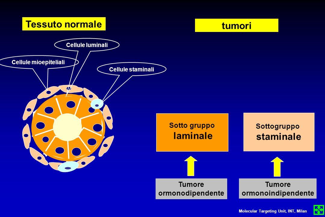 Cellule mioepiteliali