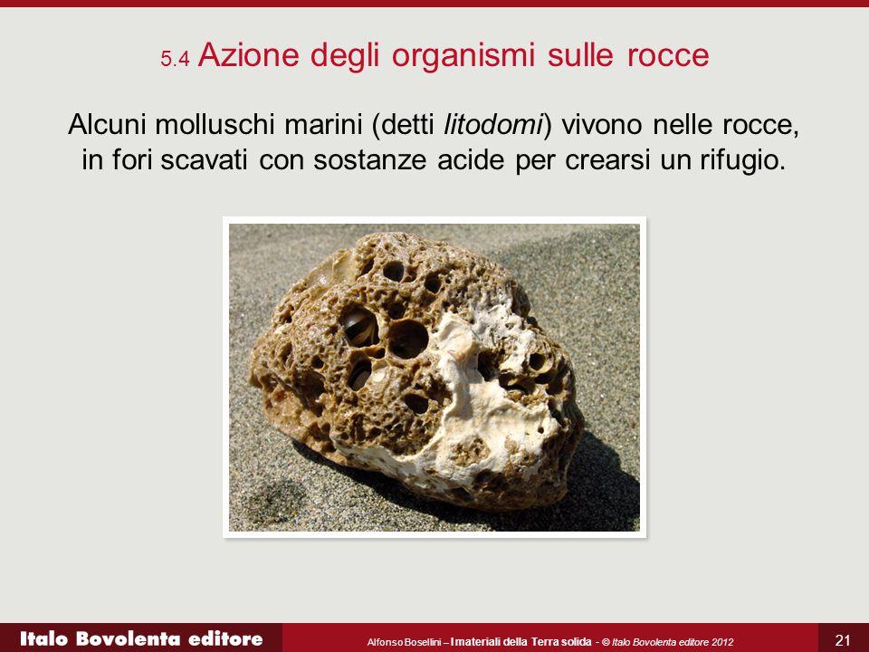5.4 Azione degli organismi sulle rocce