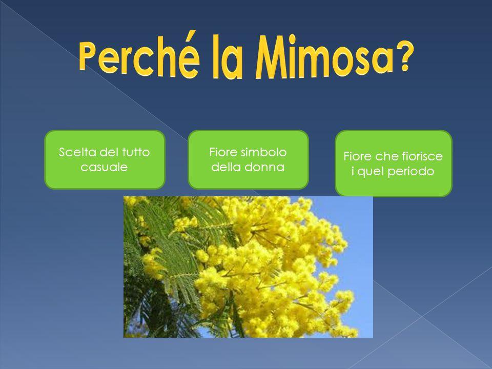 Perché la Mimosa Scelta del tutto casuale Fiore simbolo della donna