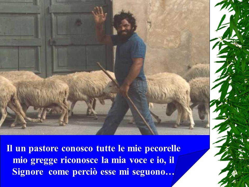 Il un pastore conosco tutte le mie pecorelle mio gregge riconosce la mia voce e io, il Signore come perciò esse mi seguono…