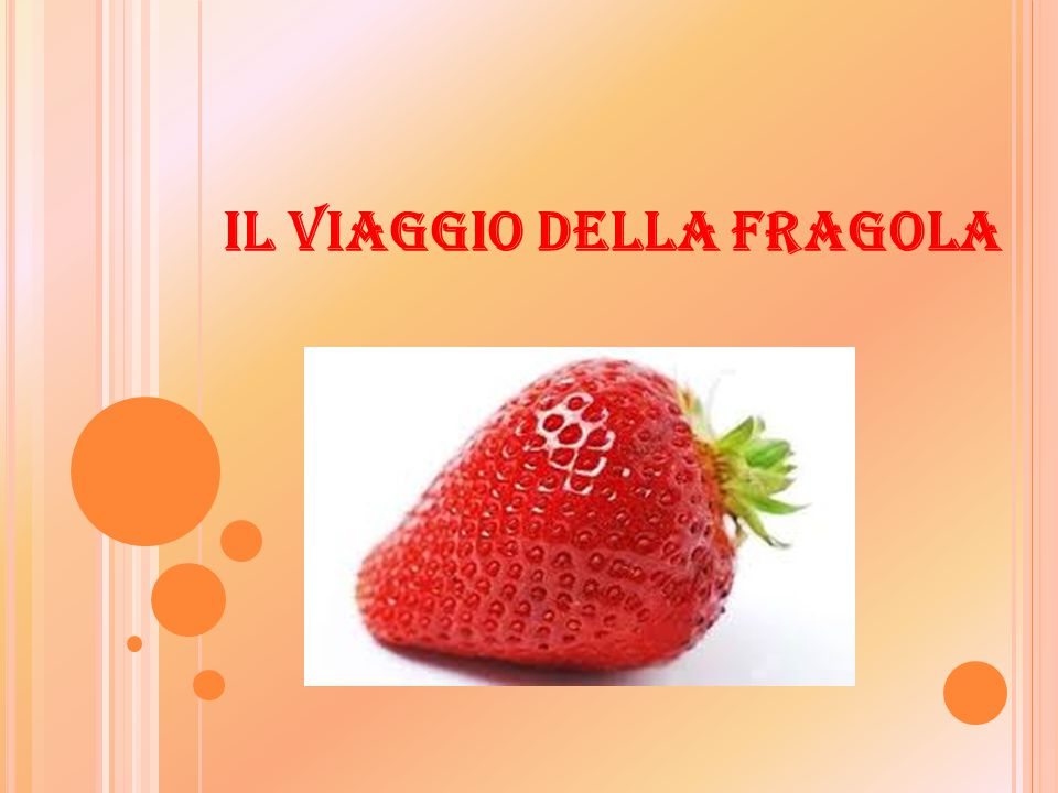 IL VIAGGIO DELLA FRAGOLA