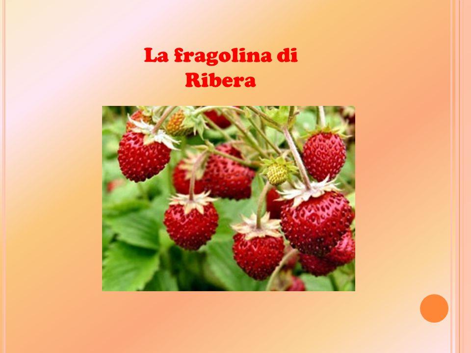 La fragolina di Ribera