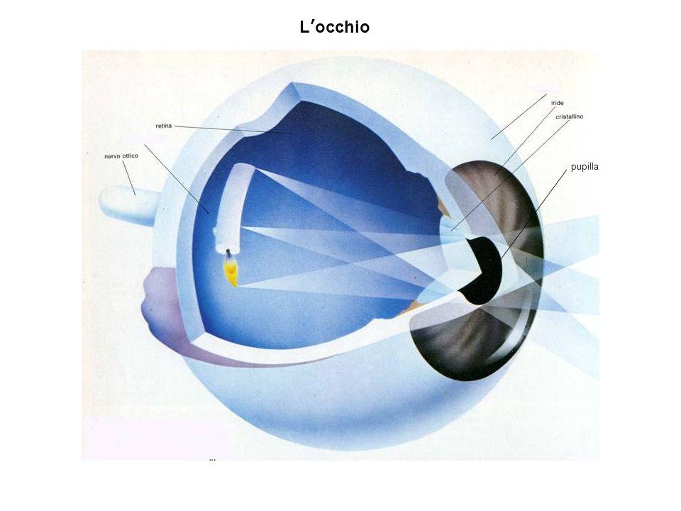 L'occhio pupilla