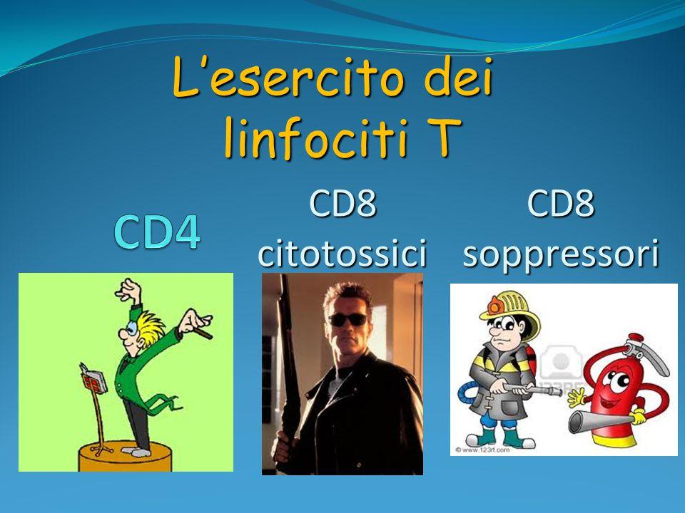 L'esercito dei linfociti T CD4 CD8 citotossici CD8 soppressori