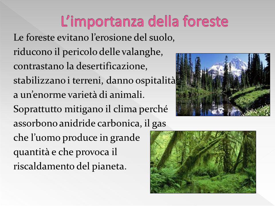 L'importanza della foreste