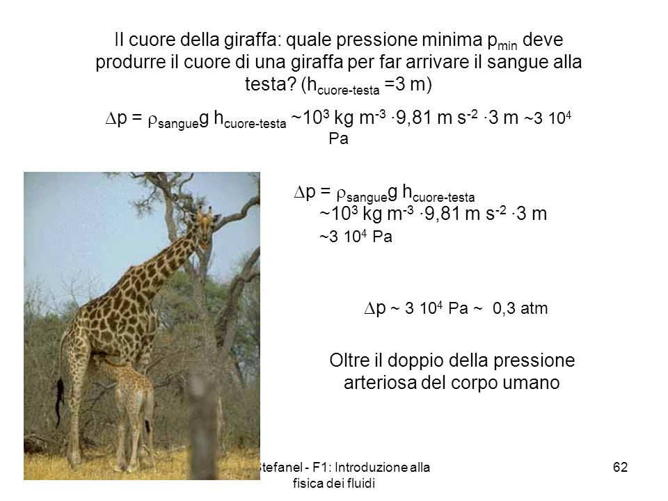 p = sangueg hcuore-testa ~103 kg m-3 ·9,81 m s-2 ·3 m ~3 104 Pa