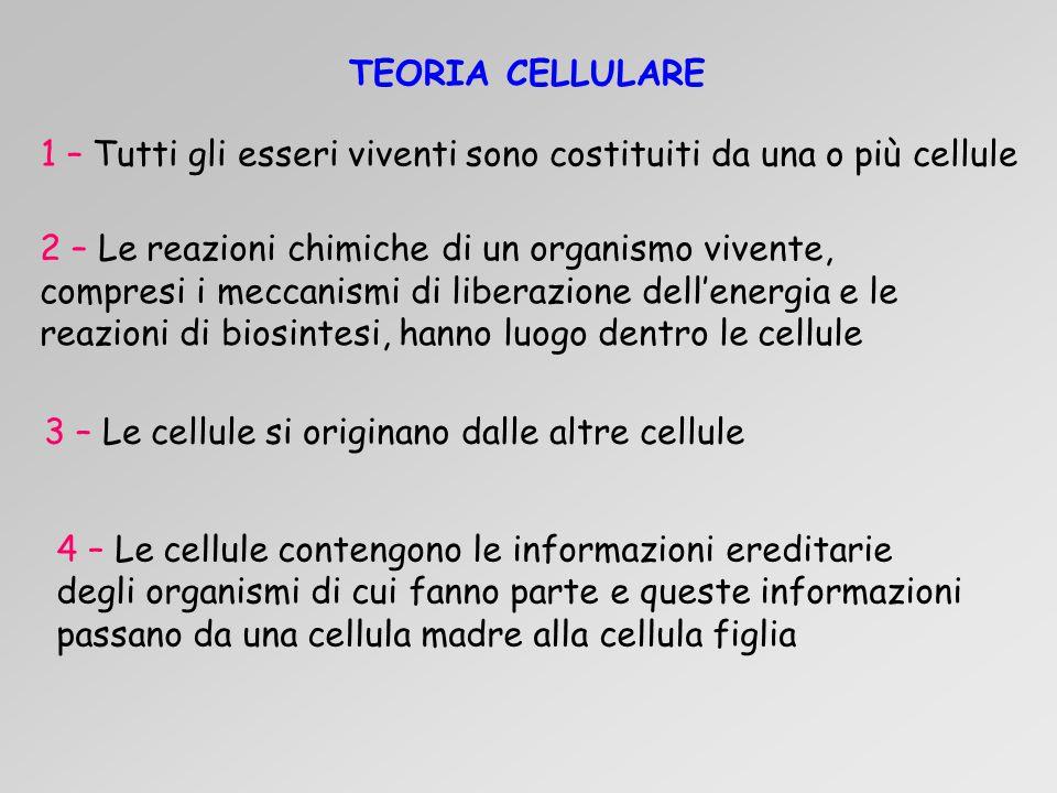 TEORIA CELLULARE 1 – Tutti gli esseri viventi sono costituiti da una o più cellule.