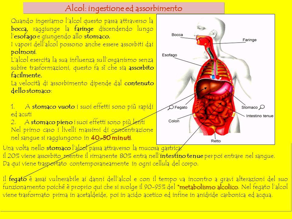 Alcol: ingestione ed assorbimento