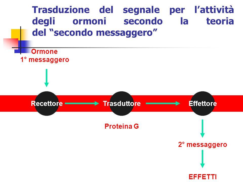 Trasduzione del segnale per l'attività degli ormoni secondo la teoria del secondo messaggero