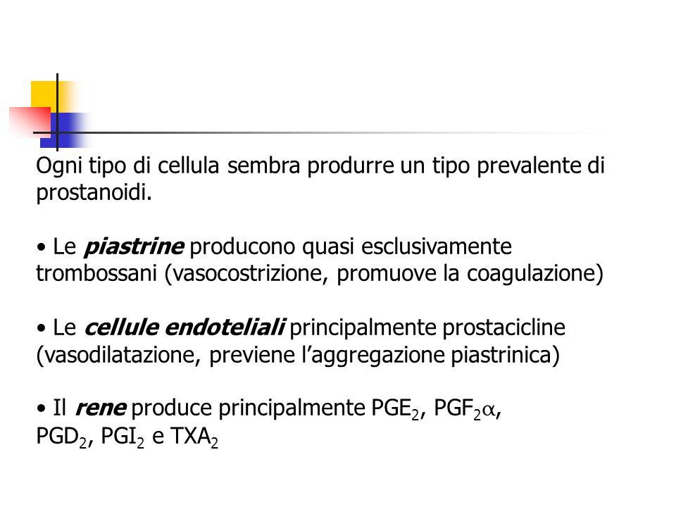 Ogni tipo di cellula sembra produrre un tipo prevalente di prostanoidi.