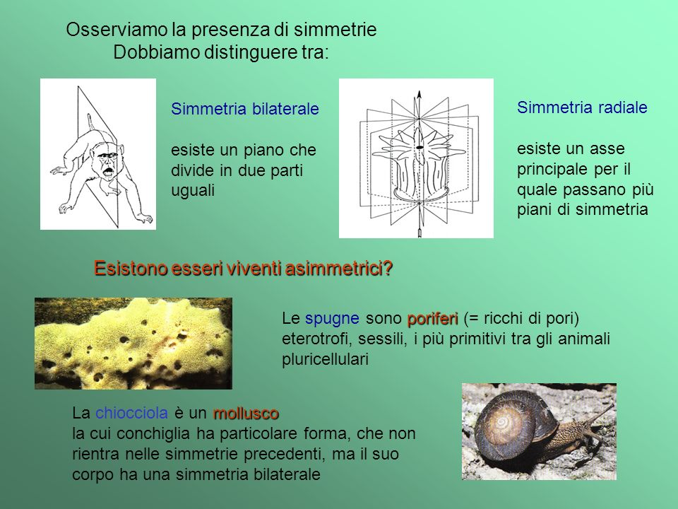 Osserviamo la presenza di simmetrie Dobbiamo distinguere tra: