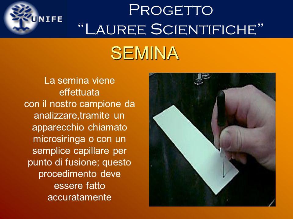 SEMINA Progetto Lauree Scientifiche La semina viene effettuata