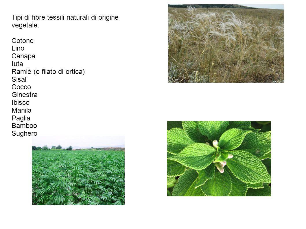 Tipi di fibre tessili naturali di origine vegetale:
