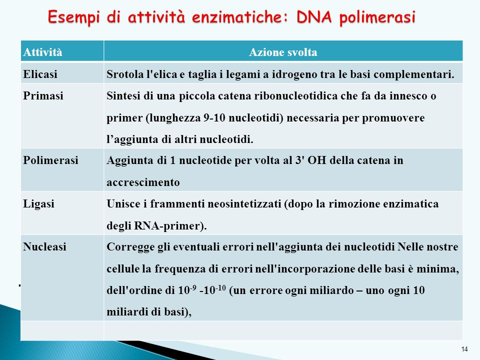 Esempi di attività enzimatiche: DNA polimerasi