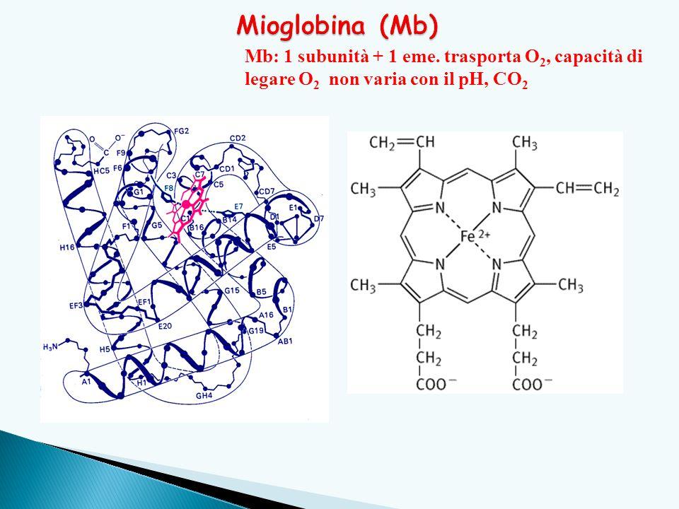 Mioglobina (Mb) Mb: 1 subunità + 1 eme.