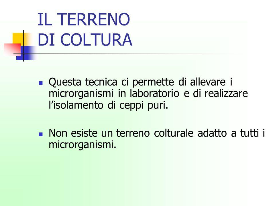 IL TERRENO DI COLTURA Questa tecnica ci permette di allevare i microrganismi in laboratorio e di realizzare l'isolamento di ceppi puri.