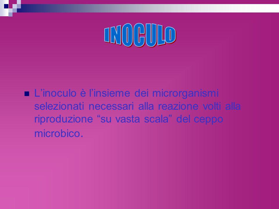 INOCULO L'inoculo è l'insieme dei microrganismi selezionati necessari alla reazione volti alla riproduzione su vasta scala del ceppo microbico.
