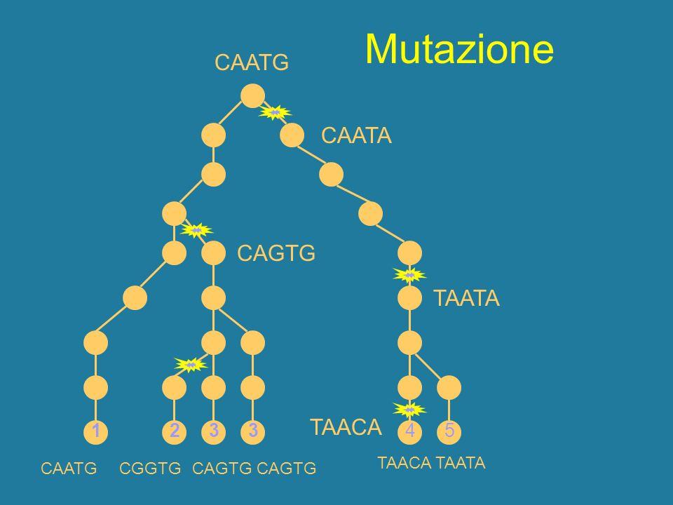 Mutazione CAATG CAATA CAGTG TAATA TAACA 1 1 2 3 3 4 5 TAACA TAATA