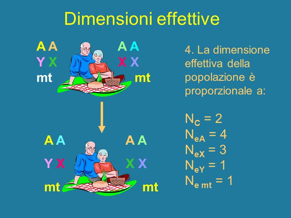 Dimensioni effettive A A A A Y X X X mt mt NC = 2 NeA = 4 NeX = 3