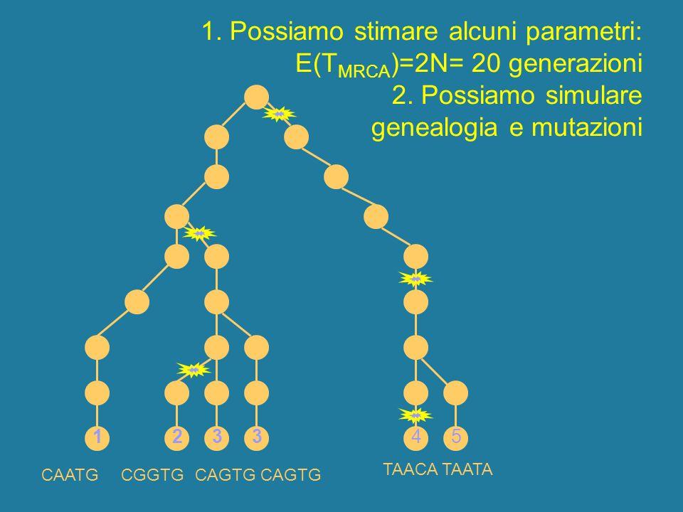 1. Possiamo stimare alcuni parametri: E(TMRCA)=2N= 20 generazioni 2