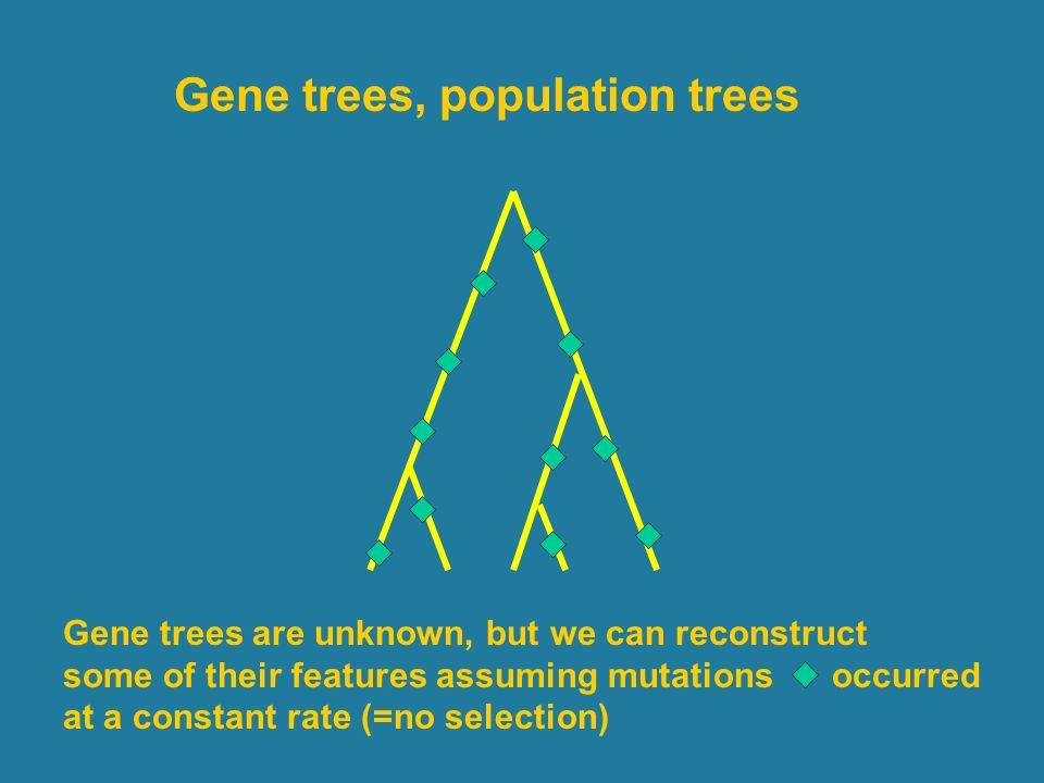 Gene trees, population trees