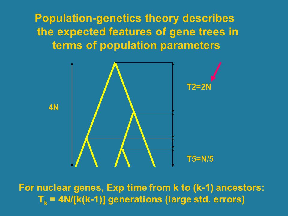Population-genetics theory describes