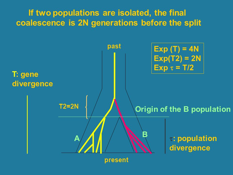 If two populations are isolated, the final