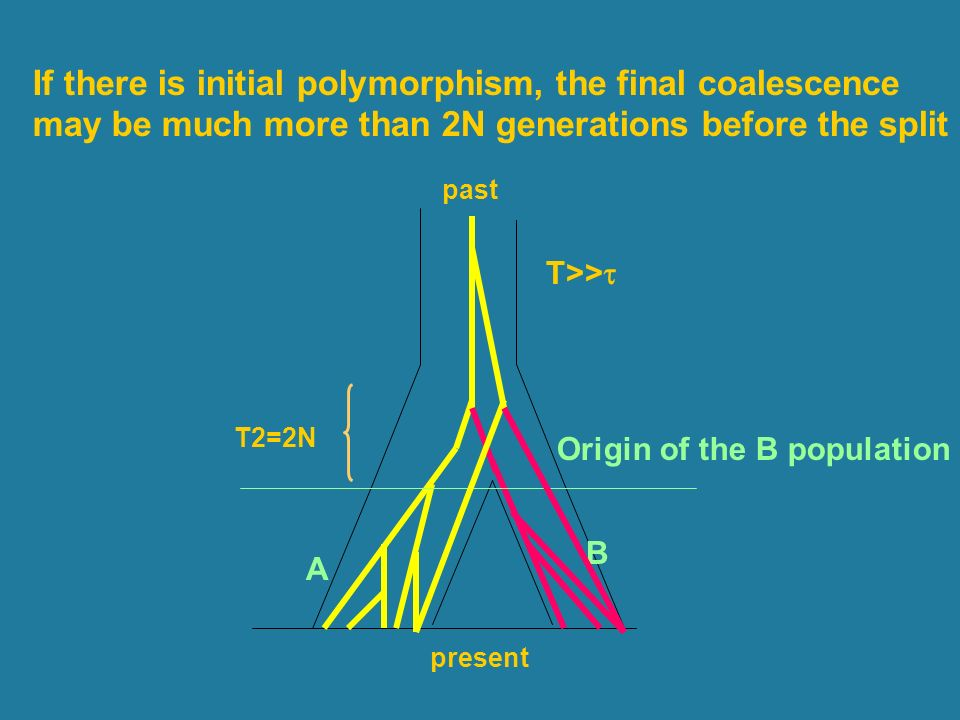 If there is initial polymorphism, the final coalescence
